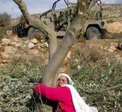 Photo of من الأرض المحتلّة، الكاتب والباحث الفلسطيني رئيس مركز نينوى للثقافة والفنون نصّار إبراهيم، يكتب للجريدة المدنية: