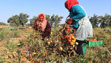 Photo of الحقوق الاقتصادية للنساء بين التشريعات والسياسات