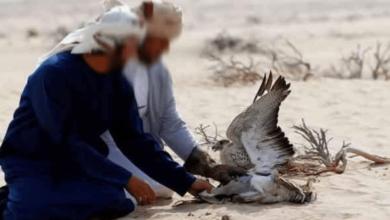 Photo of منتدى الحقوق الاقتصادية و الاجتماعية  : طائرات الإبادة القطرية تهدد الثروة الحيوانية بصحراء توزر