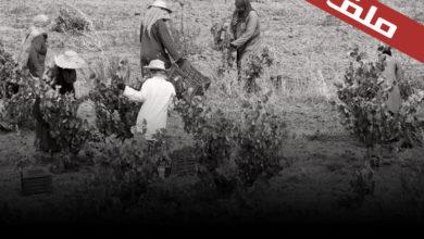 Photo of تجربة التعاضد في الستينات : السياقات و الاكراهات
